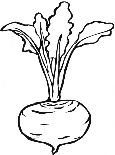 Lettuce clipart tomato salad Beetroot Beetroot 7 Coloring Super