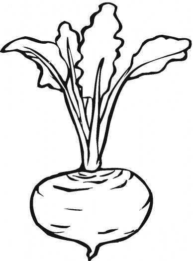 Lettuce clipart vector Coloring Super coloring Beetroot Lettuce