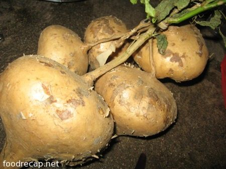 Beetroot clipart singkamas Pickles Yam Pinterest 12 on