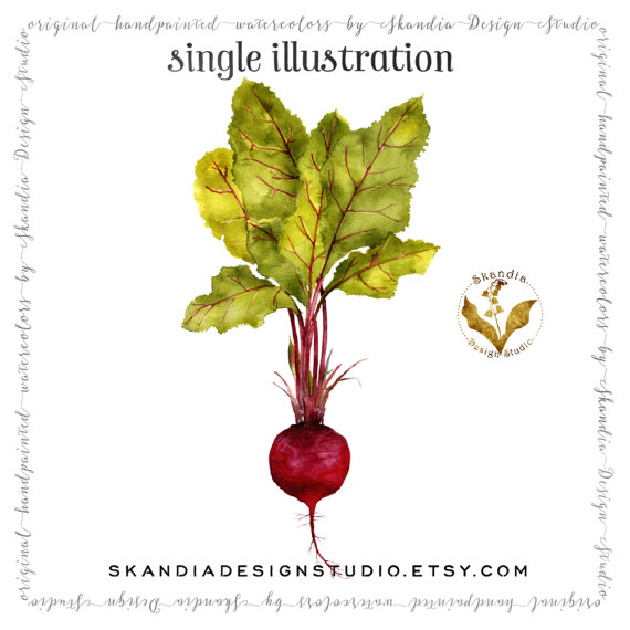 Beet clipart single vegetable Handpainted clipart garden clipart Beet