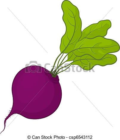 Beet clipart single vegetable Vector Vegetable  fresh with