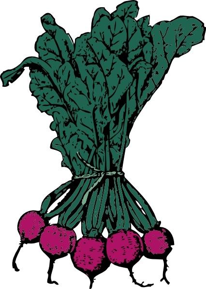 Beet clipart radish For vector free vector vector)