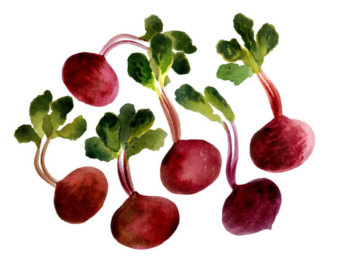 Beet clipart single vegetable Smoothie Beets Etsy clip clipart