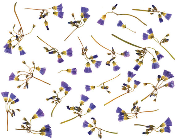 Bell clipart real Scan clipart on flowers and