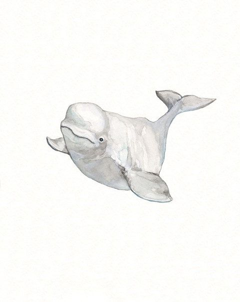 Beluga Whale clipart Gray 00 about print on
