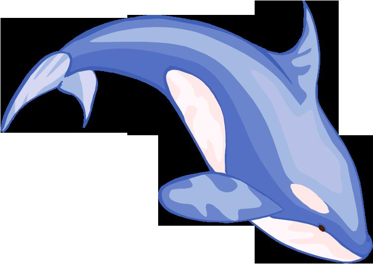 Beluga clipart happy Com Beluga Clipartion Png Art