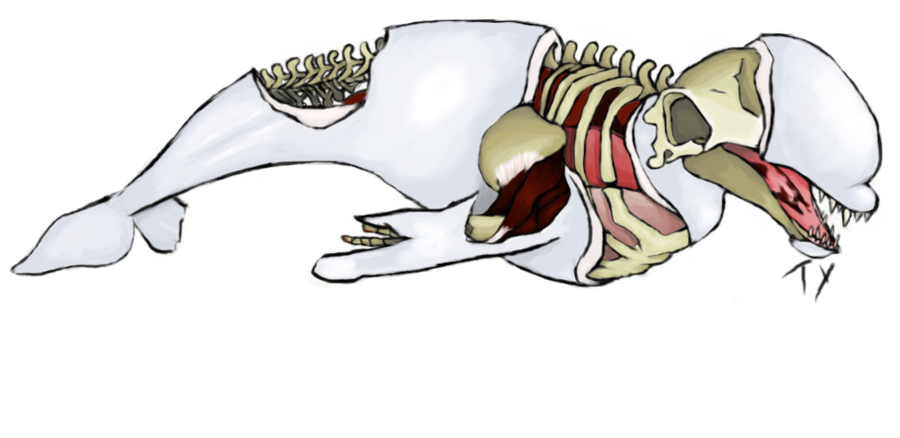 Beluga Whale clipart animated On dead by YoursTruly dead