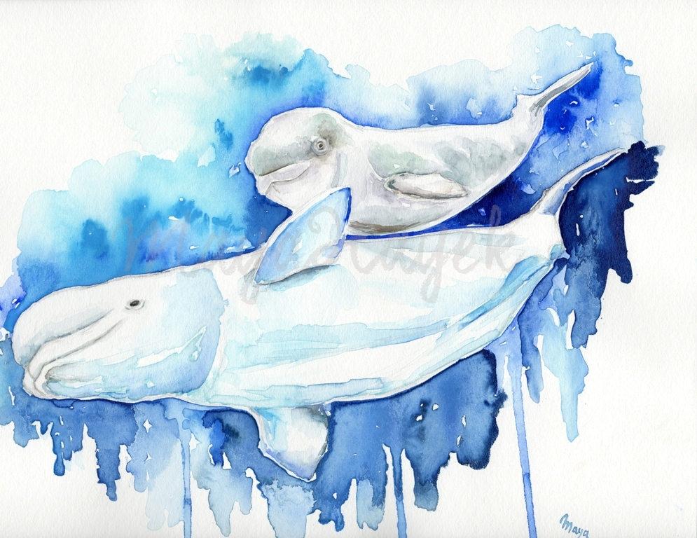 Beluga Whale clipart baby beluga Beluga art whale whale Etsy