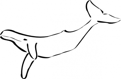 Beluga Whale clipart basic 74 Vector Beluga Whale Library