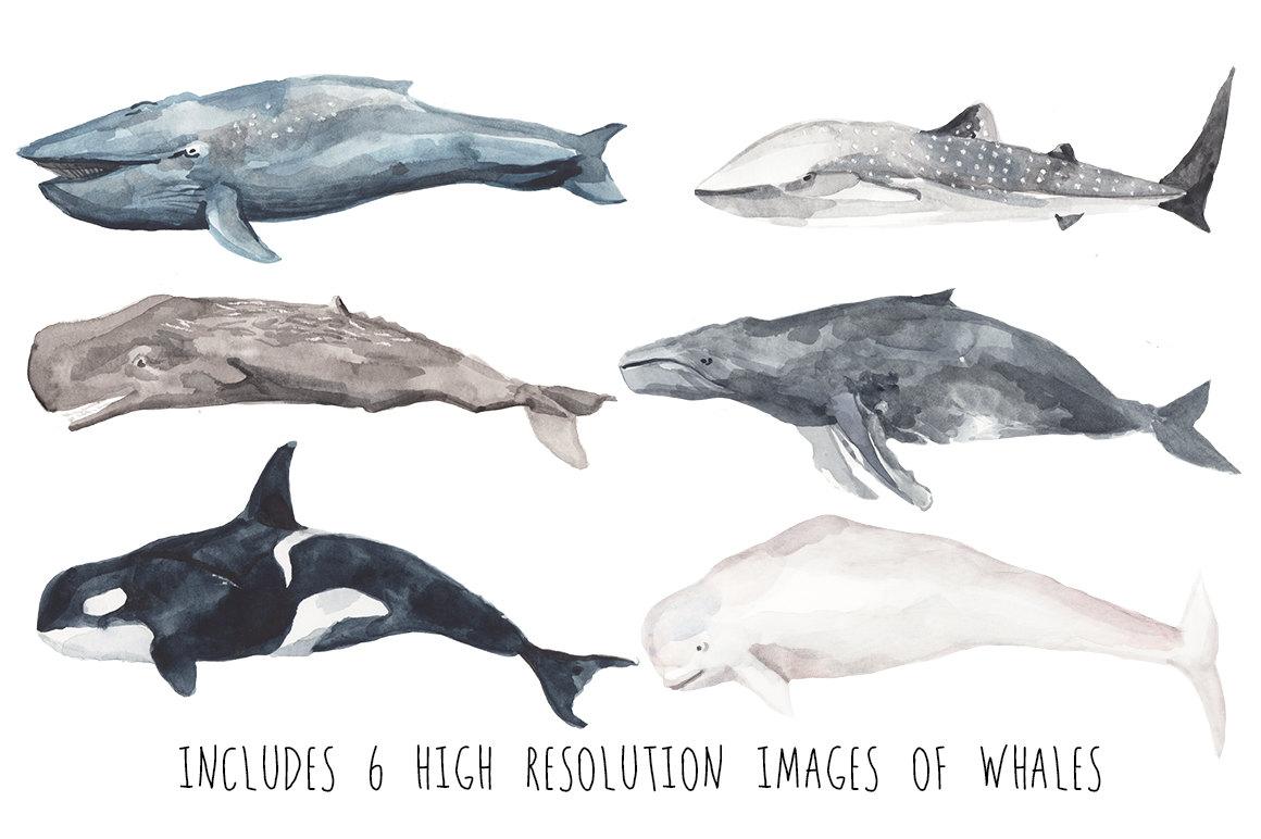 Beluga Whale clipart killer whale Nautical Clip Clipart file