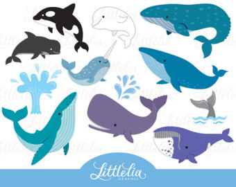 Blue Whale clipart paper Beluga Whale clipart whale Baby