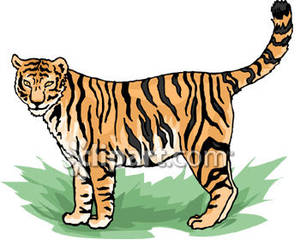 Bengal clipart chinese tiger Clipart Free Royalty Clipart Free