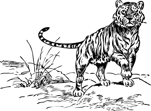 White Tiger clipart b&w Page Free Bengal Tiger Free