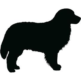 Bernese Mountain Dog clipart newfoundland Dogs dog clipart newfoundland