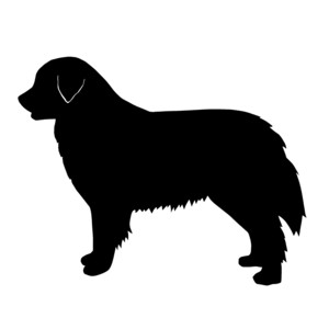 Bernese Mountain Dog clipart newfoundland Dog and Bernese Summer Dog