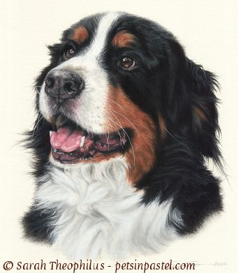 Bernese Mountain Dog clipart sheepdog Paintings Dog Bernese Bernese