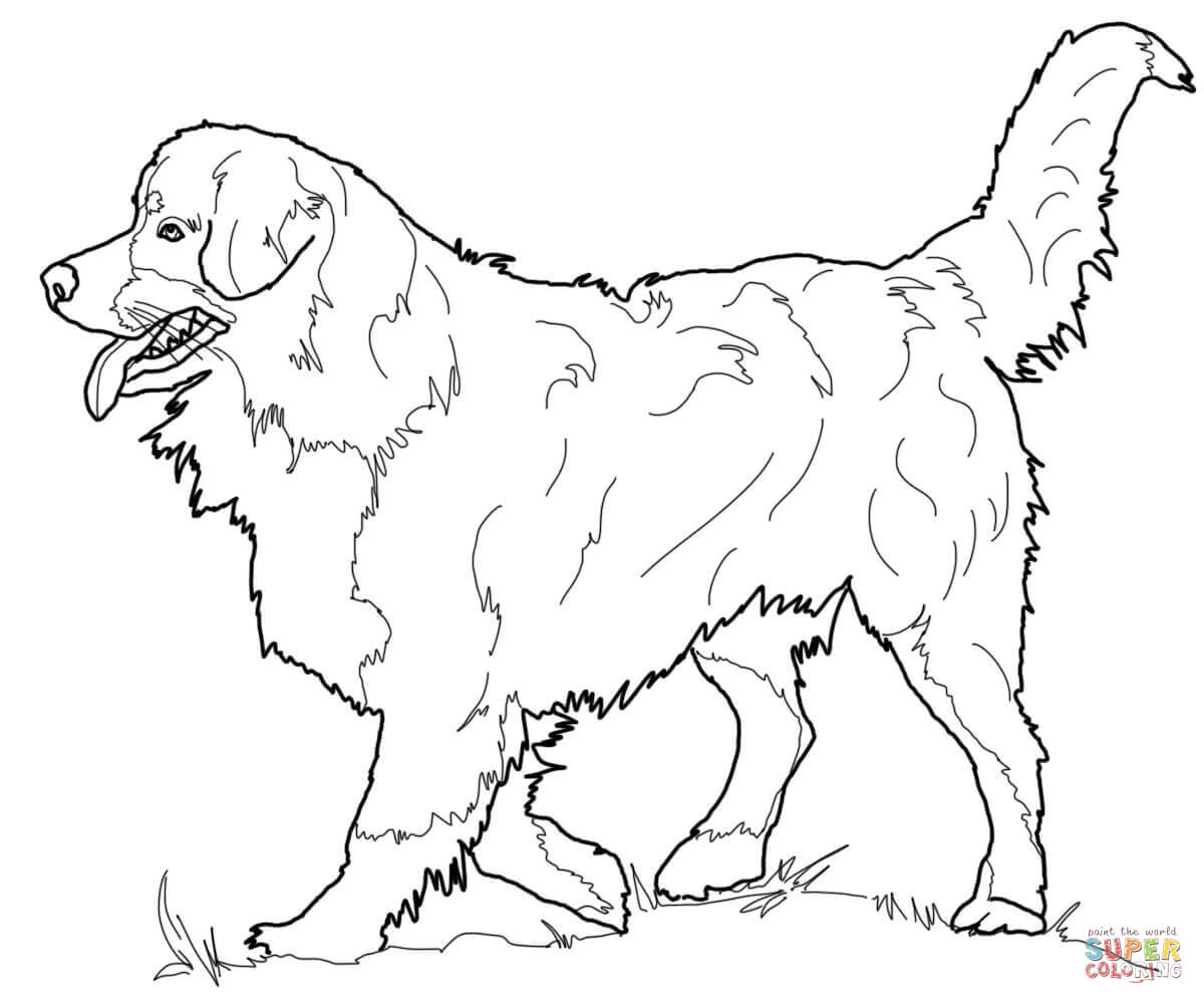Bernese Mountain Dog clipart sheepdog Dog Mountain Dog page Pages