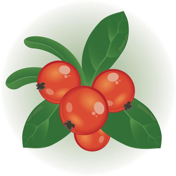 Berry clipart currant Clipart Clipart Berry clipart berry
