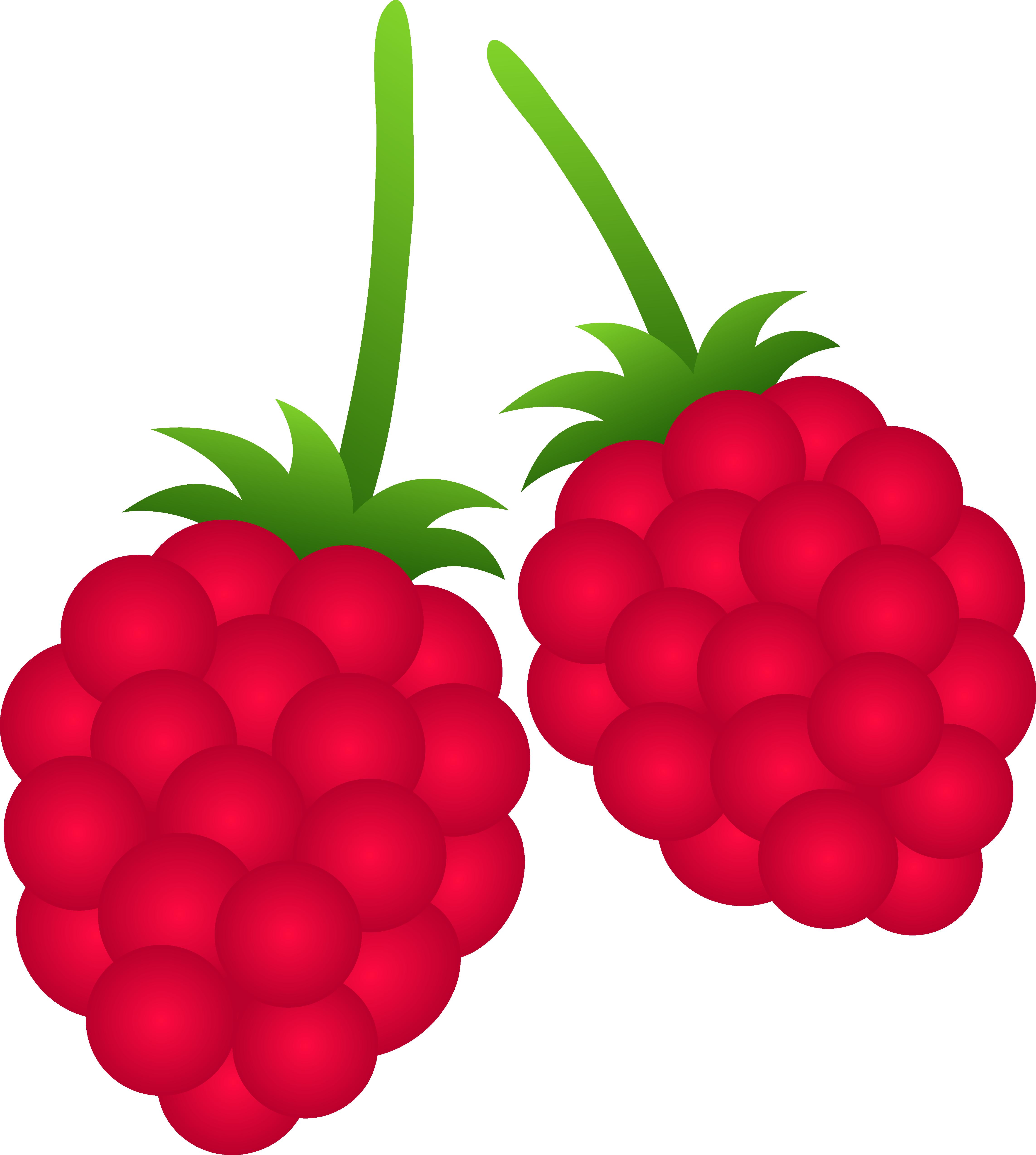 Rapsberry clipart Berry%20clipart Free Clipart Clipart 20clipart