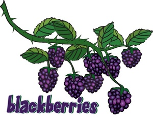 Bush clipart blackberry bush Blackberries Download Berries Free Clip