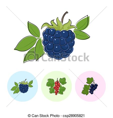 Berry clipart blackcurrant Fruit Vector Blackberry Fruit Illustration