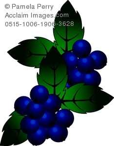 Berry clipart blueberry Of a a Art Illustration