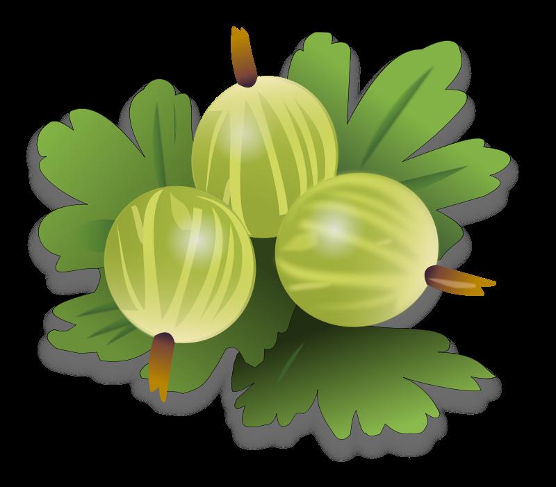 Berry clipart guava Clip Download Gooseberrys Green Green