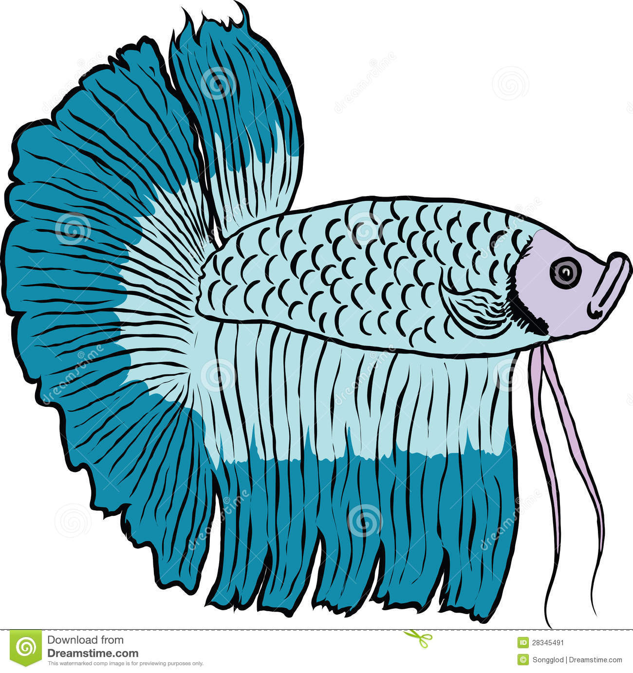 Betta clipart Fighting clipart Fish Fighting Siamese