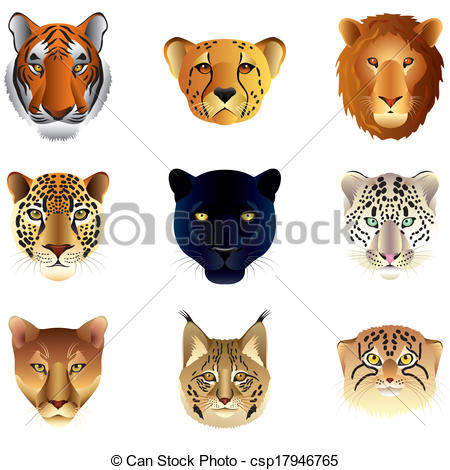 Big Cat clipart #6