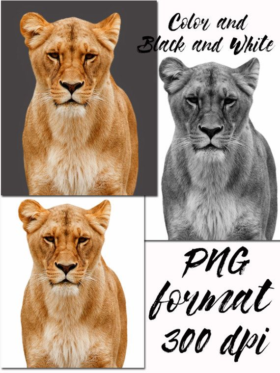 Big Cat clipart forest animal Clipart PNG Animals Print Animals