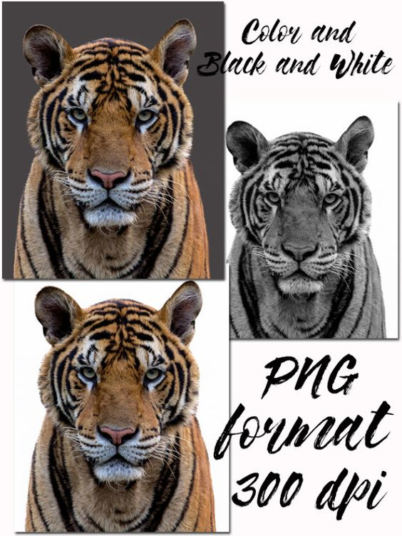 Big Cat clipart forest animal Animals  PNG Forest for