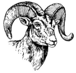 Bighorn Sheep clipart Clipart Sheep Sheep clipart Dall