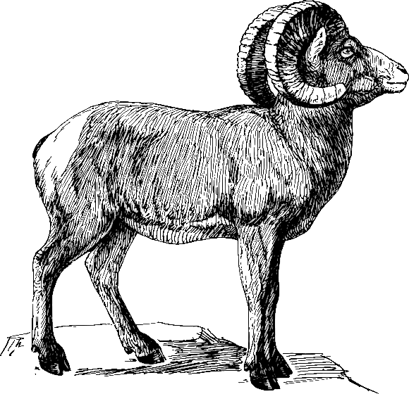 Sheep clipart ram #5