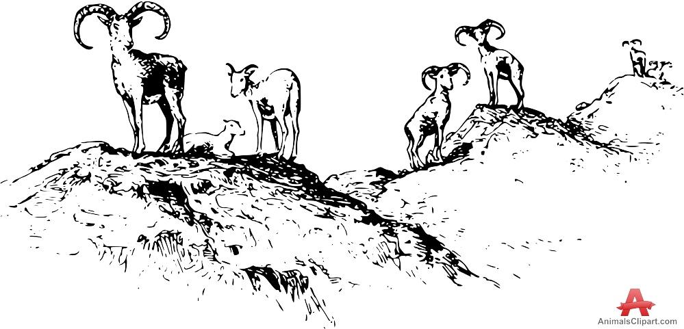 Bighorn Sheep clipart bull elk Sheep Mountain sheep Animals keywords