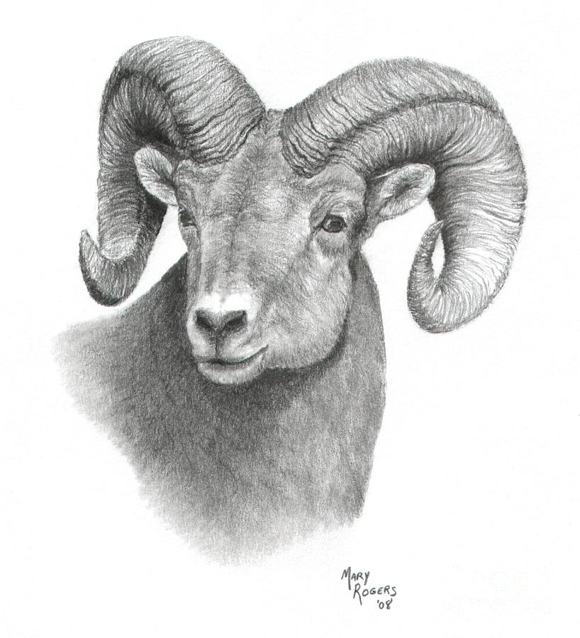 Drawn sheep cartoon black and white Bighorn Head Bighorn head sheep