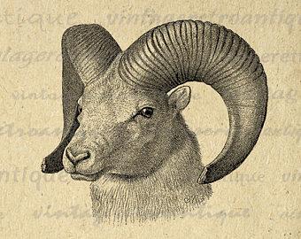 Bighorn Sheep clipart ram horn Ram Horns Clip Farm Antique