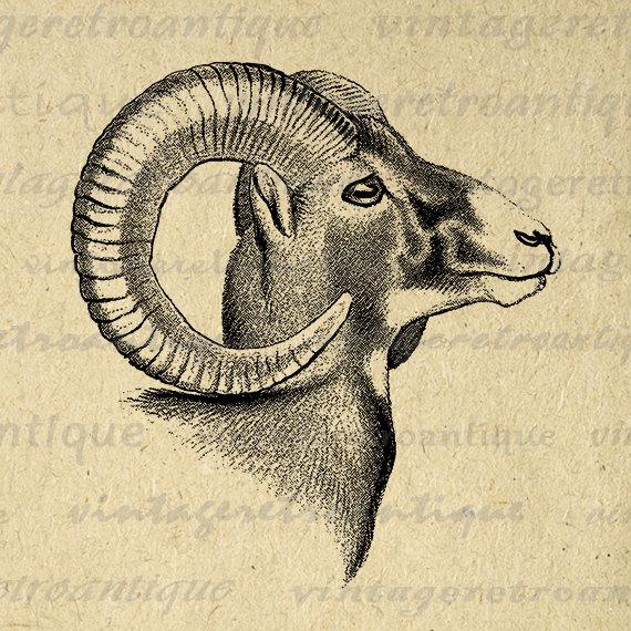 Bighorn Sheep clipart ram horn Printable Sheep Png Image 470