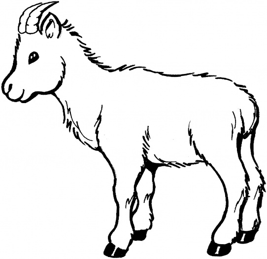 Mountain Goat clipart baby goat #2
