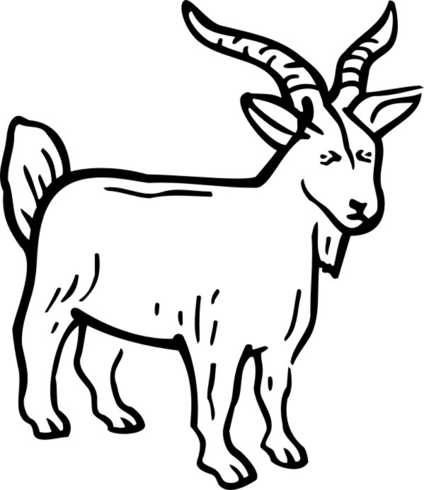 Billy Goat clipart line drawing Goat Clipart Billy Download Panda