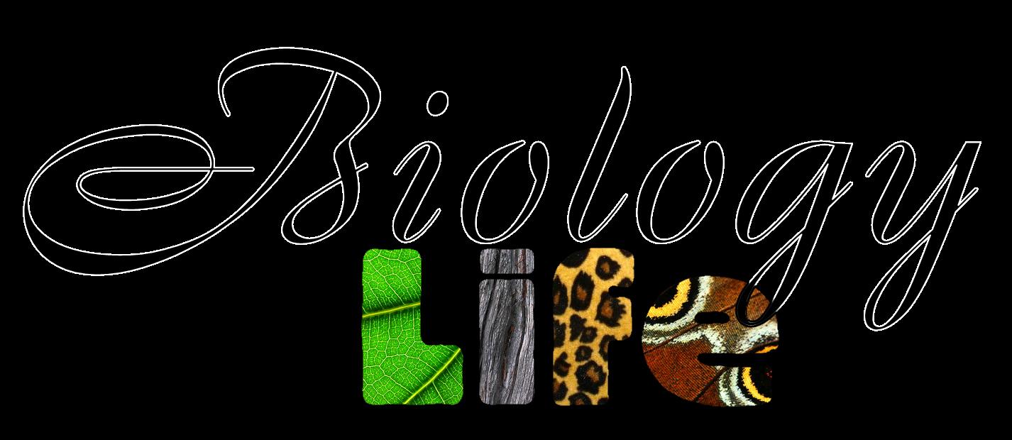 Bio clipart wildlife biologist BIO Biology Game Plan My