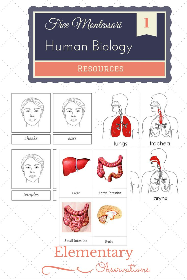 Bio clipart zoology 204 My best up! ever