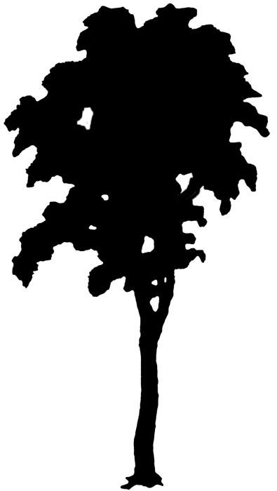 Birch clipart Leaf Clipart Birch Clipart Free
