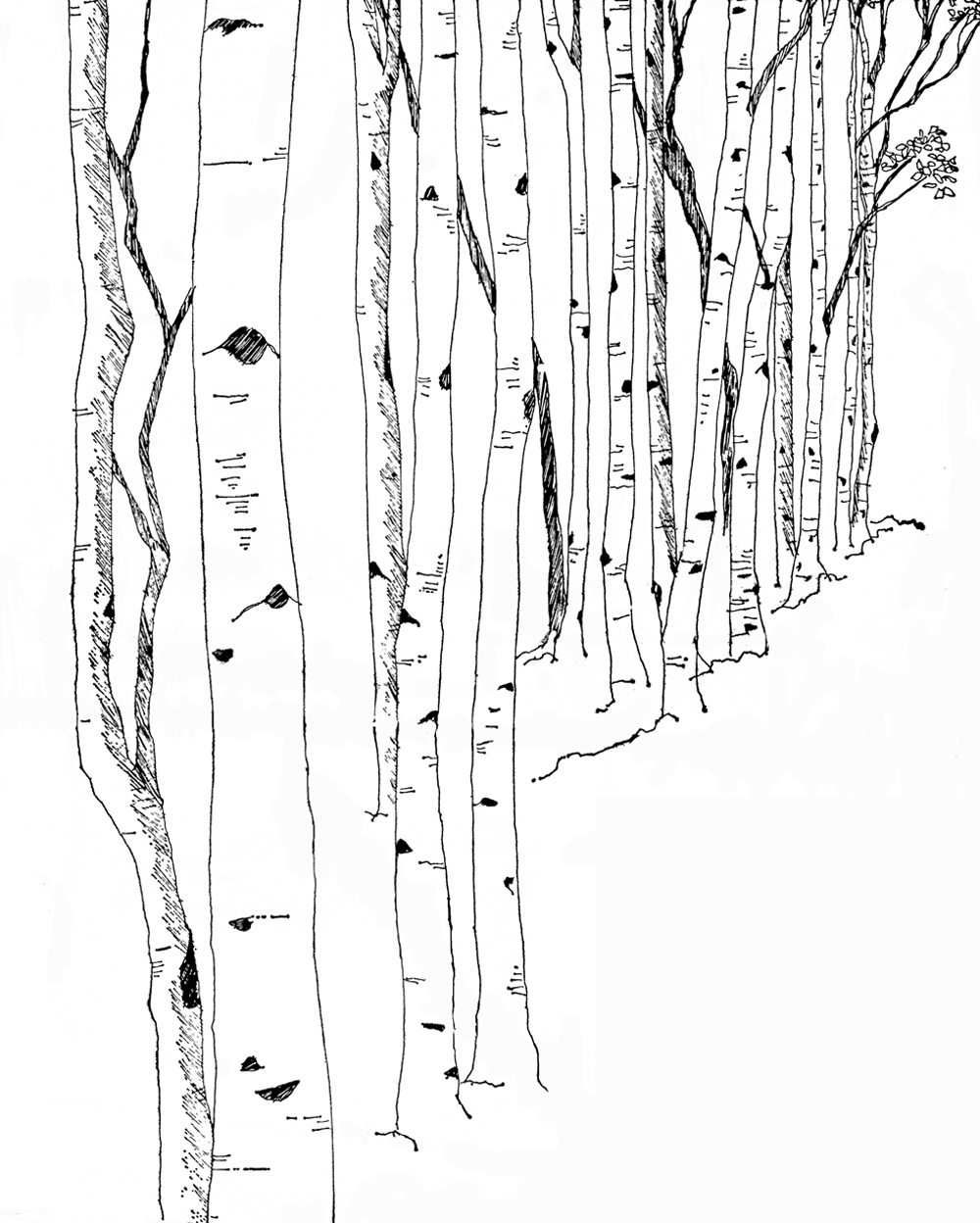 Birch clipart Tree Free Birch Clipart Tree