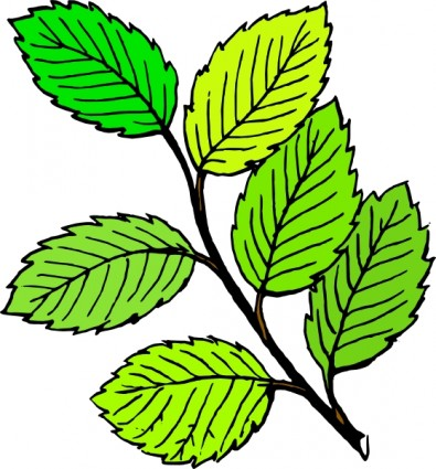 Birch clipart ash tree Ash%20clipart Ash Clipart 20clipart Images