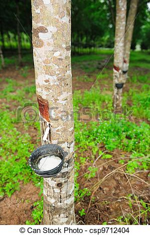 Birch clipart rubber tree Photo tree tree Images rubber
