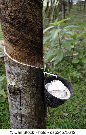 Birch clipart rubber tree Of Malaysia gives  juice