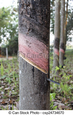 Birch clipart rubber tree Illustrations tree tree rubber rubber