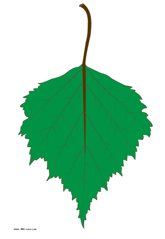 Birch clipart ash tree Birch leaf raster clipart raster