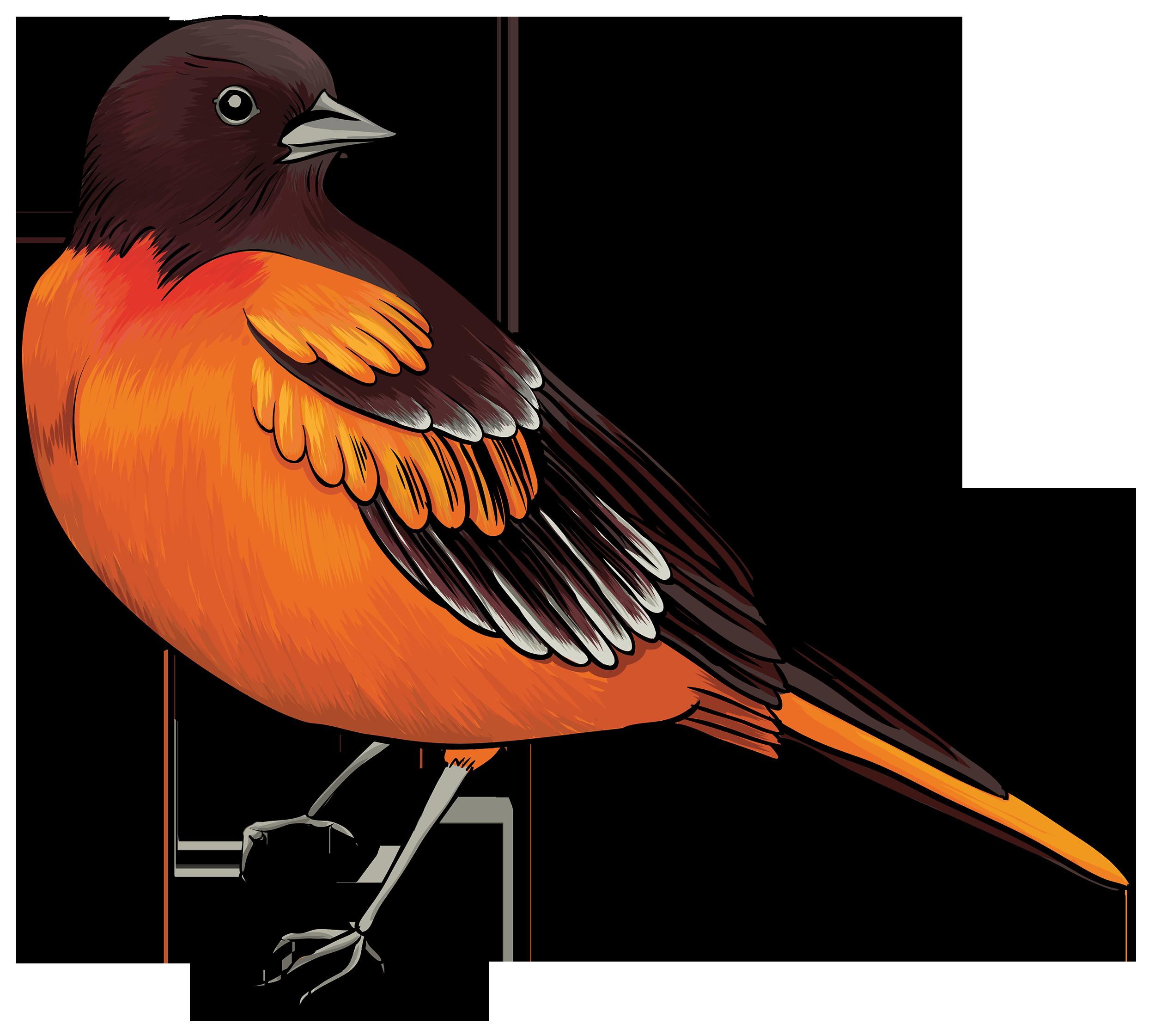 Sea Bird clipart robin #5