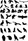 Brds clipart baaz Prey Birds blue Free of